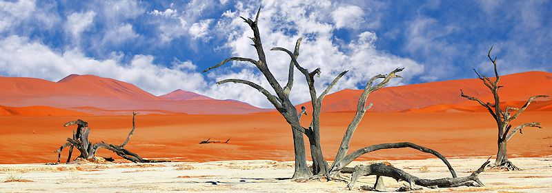 Deadvlei contrasted against the deep red of Sossusvlei in Namibia.