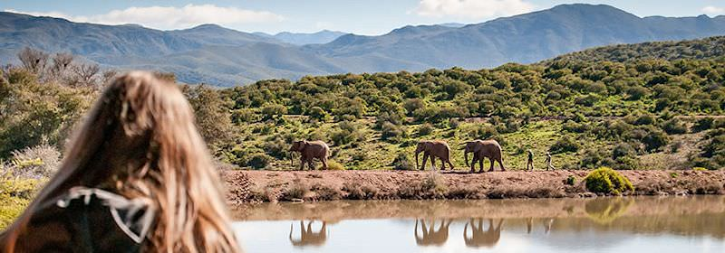 Guests walk with elephants in South Africa.