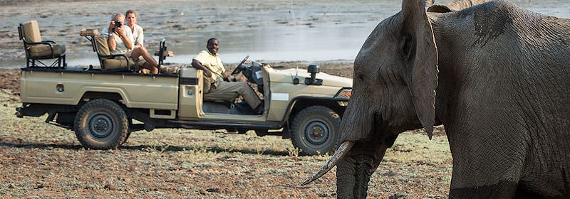 Guests on safari in Zambia observe an elephant up close.