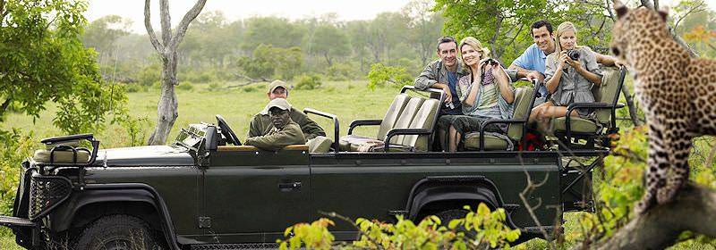 Guests on safari in the Sabi Sand observe a leopard..