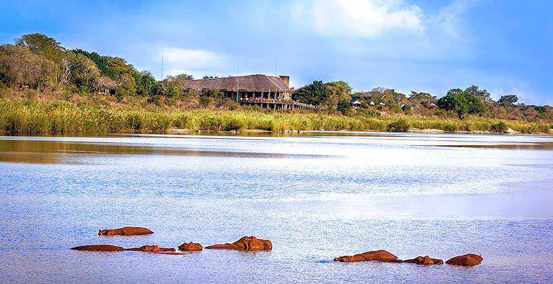 Hippos bask in a dammed up section of the Sabie River in front of Lower Sabie Rest Camp.