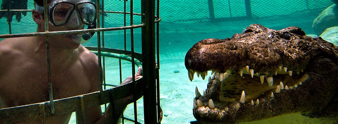 Cage diving with crocodiles at the Cango Wildlife Ranch.