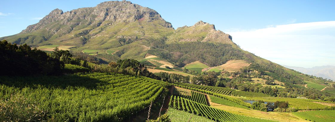 Neat rows of vineyards line the slopes of the Drakenstein Mountains in the Franschhoek Valley.