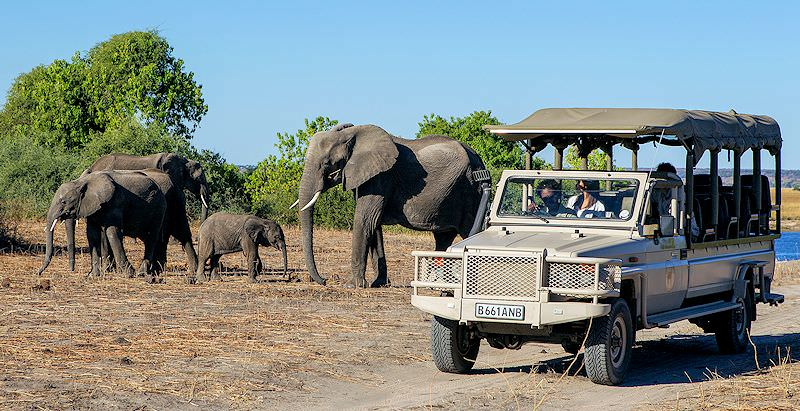 An open-air 4x4 game drive in Botswana's Chobe National Park.