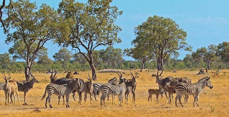 Eland, zebras and impalas gather around a pan in Hwange National Park.