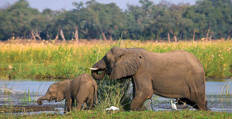Lower Zambezi National Park | Zambia Travel - African Sky