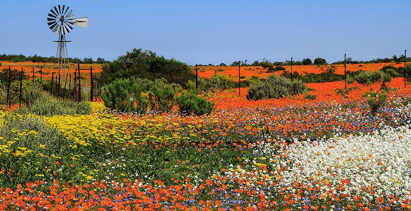 The rainbow quilt of Namaqua National Park in the springtime.