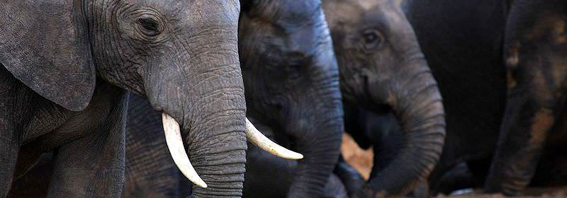 A close-up photograph of elephants in the Addo Elephant National Park.