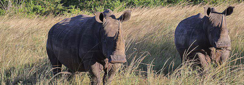 A rhino encountered on safari in the Hlhluwe-iMfolozi Game Reserve.