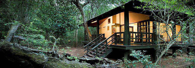 Phinda Forest Lodge is surrounded by rare sand forests.