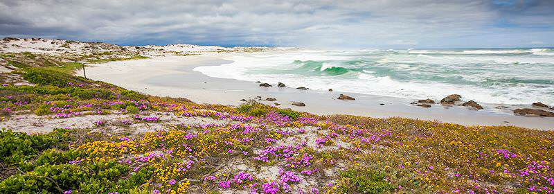 Wild flowers bloom along the shores of the West Coast National Park.