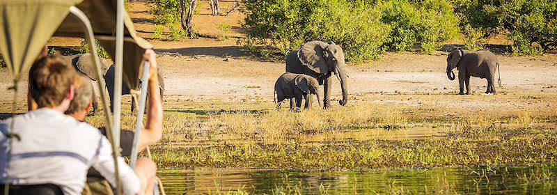Guests observe elephants from the safety of a safari boat on the Chobe River.