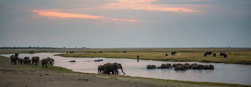 Elephants cross the majestic Chobe River in the Chobe National Park.