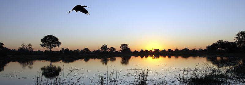 A bird takes flight above a channel in the Okavango Delta.