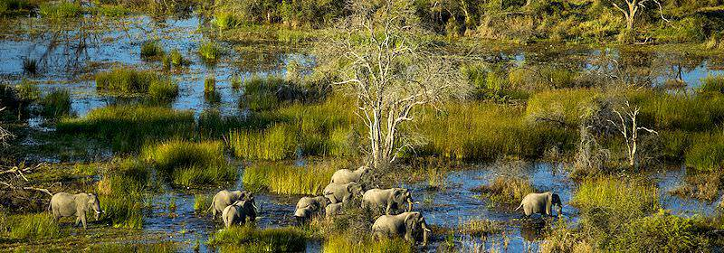 Elephants seen from above in the Okavango Delta.