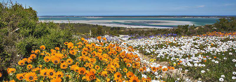 Springflowers bloom on the shores of the West Coast.