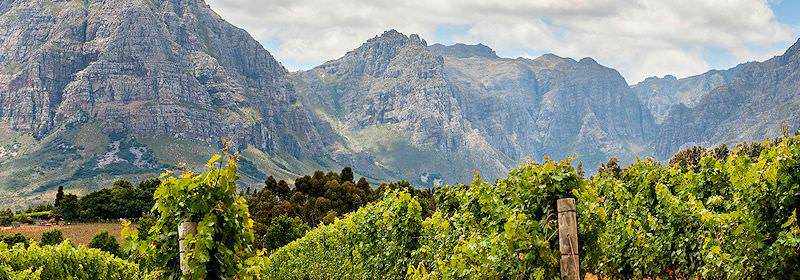 The Cape winelands framed by a backdrop of the Cape fold mountains.