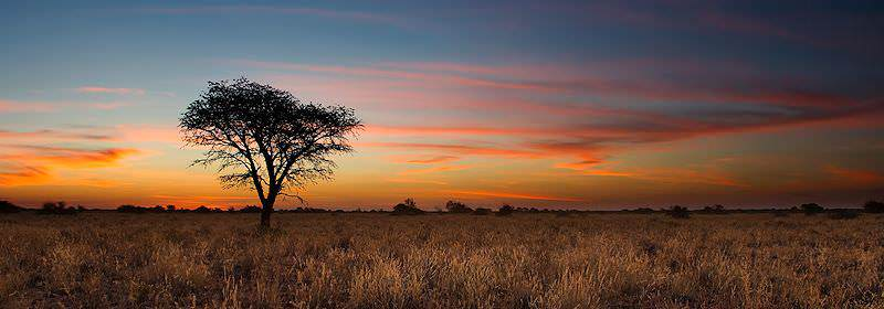 A tranquil sunset in the African bushveld.