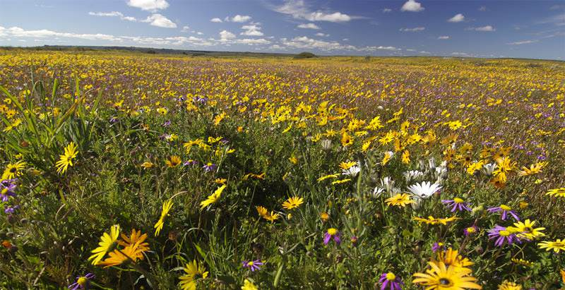 If you opt for the 3 Day West Coast Tour during springtime, you may encounter millions of wild flowers in bloom.