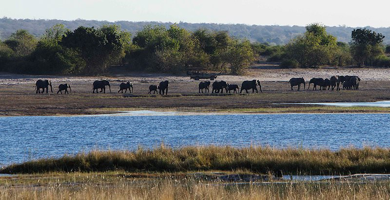 A game drive vehicle stops alongside a herd of elephants in the Chobe National Park.