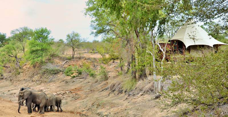 Hamiltons Tented Camp offers four star lodge accommodation on the 5 Day Two Kruger Park Lodges Safari.