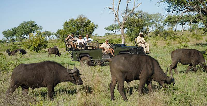 Buffaloes encountered on a game drive during the 3 Day Value Kruger Park Safari.