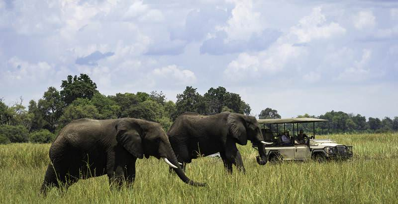 Elephants roaming the wilderness of the Okavango Delta during the 15 Day Best of Southern Africa Safari.