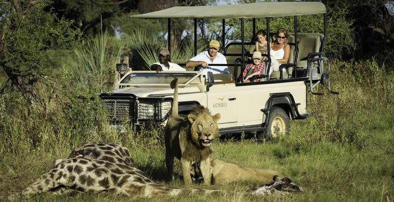 Guests at Mombo Camp observe a lion kill during a 9 Day Botswana's Finest Lodge Safari.