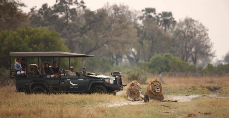 A pair of lions spotted on safari at Sandibe in the Okavango Delta during the 12 Day Three Countries Safari.