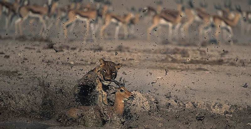 Enjoy heart-stopping wildlife encounters during your four day safari in Etosha.
