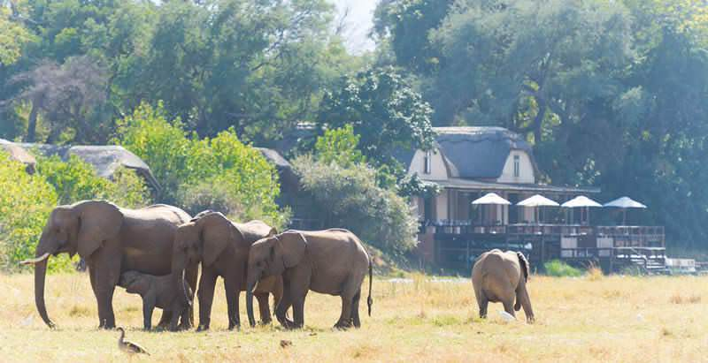 Elephants wander near the Royal Zambezi Lodge that features in the 7 Day Vic Falls and Lower Zambezi Safari.