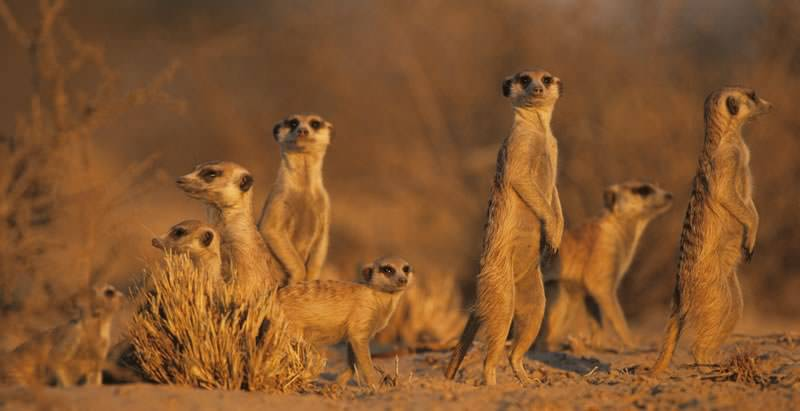 A family of meerkats encountered on the 14 Day In-Depth Namibia Overland Safari.