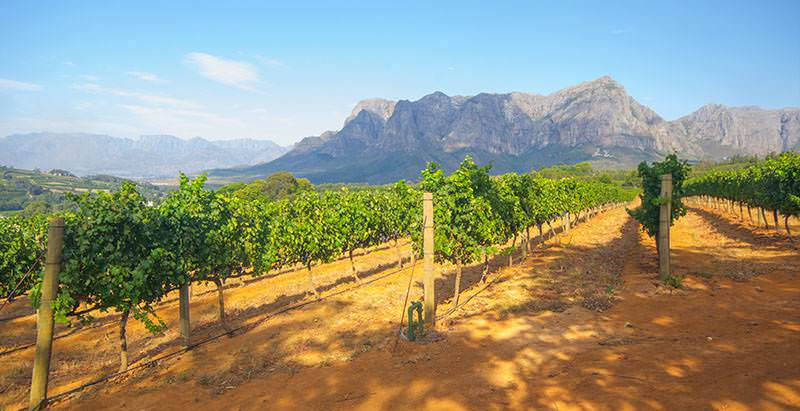 Scenery enjoyed during a day tour of the Stellenbosch Wine Route in the Cape winelands.
