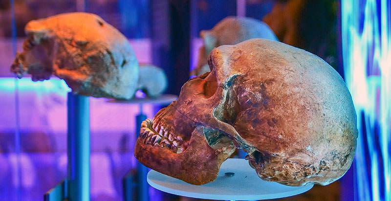 View various ancient fossils and bones during the Cradle of Humankind Day Tour.