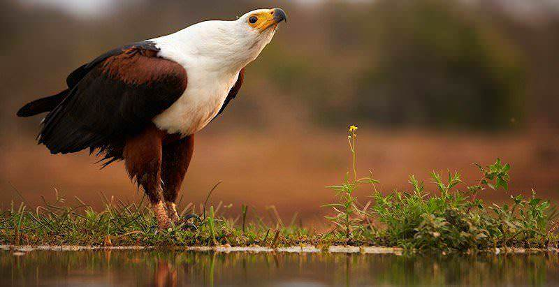 South african birding tour 10 days african sky for Oily fish representative species