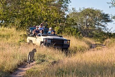 An open-air game drive in the Kruger National Park.