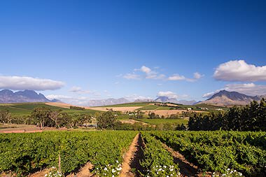 Vineyards and mountains seen on a tour of the Cape winelands.