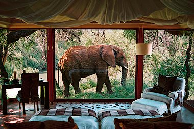 An elephant wanders past a suite at Phinda Vlei Lodge in the Phinda Private Game Reserve.