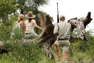 Guests on a bush walk in the Greater Kruger encounter a giraffe.