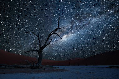 The Milky Way lights up Deadvlei at night.