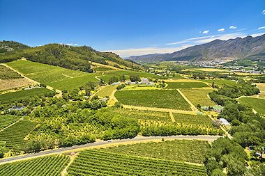 A bird's eye view of vineyards in the Cape winelands.