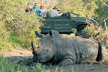 A rhino encountered on safari in the Timbavati.