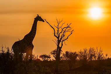 African Safari   Best Vacation Packages 2019 & 2020 - African Sky