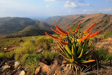 Enchanting scenery in a South African national park.