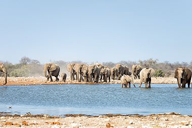 Elephants drink from a pan in Etosha National Park.