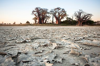 Dry, cracked earth in the Makgadikgai Pans.