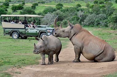 Rhinos spotted on a game drive in Shamwari.