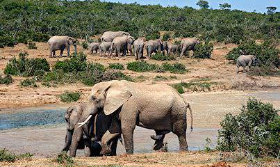 Elephants photographed on safari in South Africa's Addo Elephant National Park.