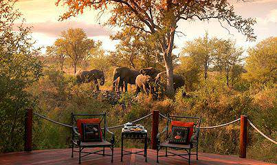 Elephants wander past Hoyo Hoyo Safari Lodge in the Kruger National Park.