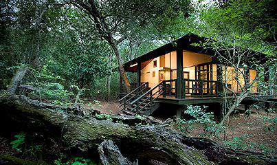 Phinda Forest Lodge is tucked away in a rare sand forest in KwaZulu-Natal.